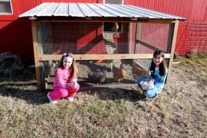 Anna's Chickens