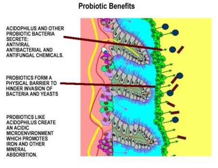 Probiotic benefits