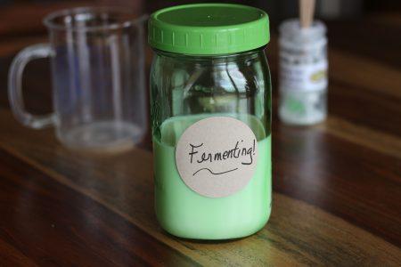 Kefir grains fermenting
