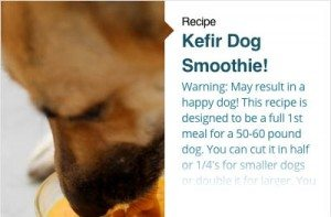 Kefir Dog Smoothie