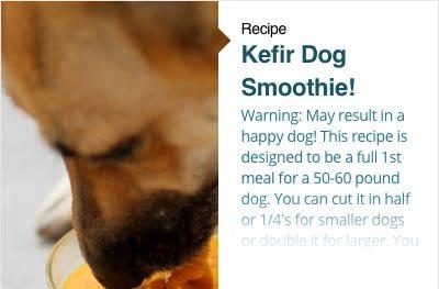 Kefir Dog Smoothie
