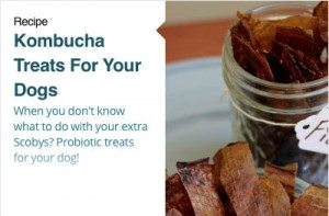 Kombucha Treats for Your Dog