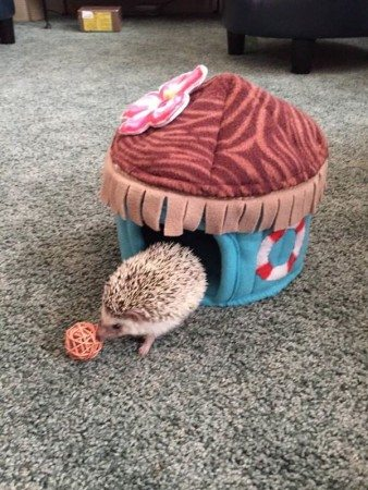 hedgehog copy