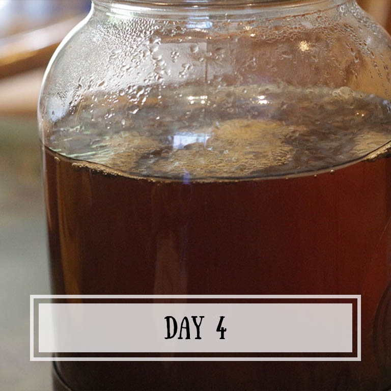 As the thin scoby starts to get a little thicker, you can see some bubbles starting to appear!