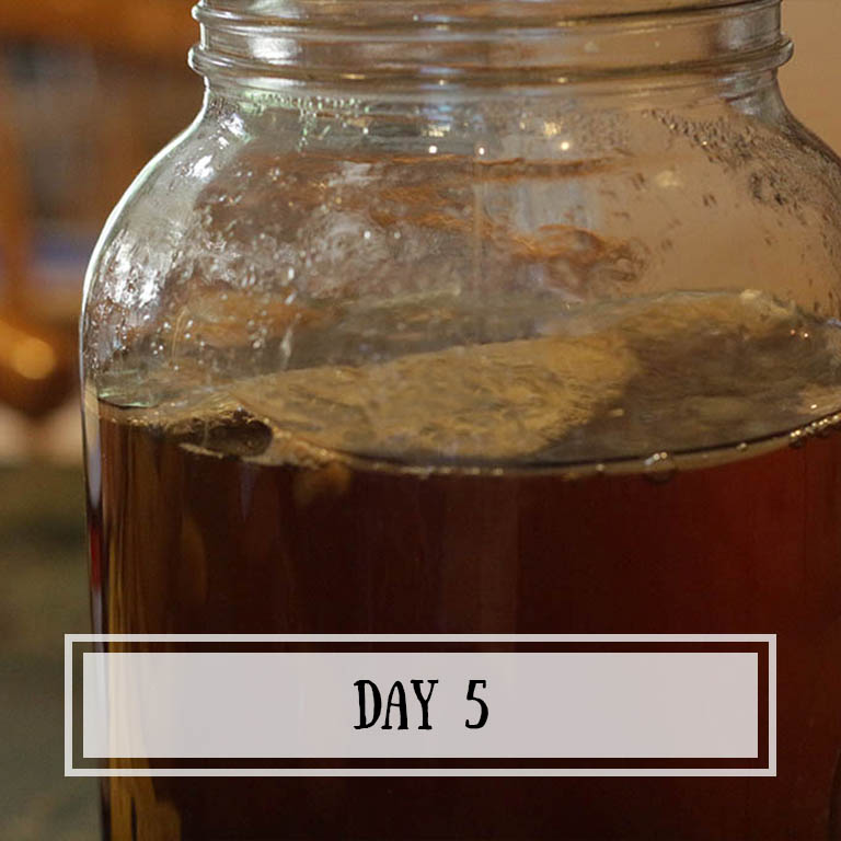 The scoby is thick enough for the bubbles to start making bigger pockets of air.