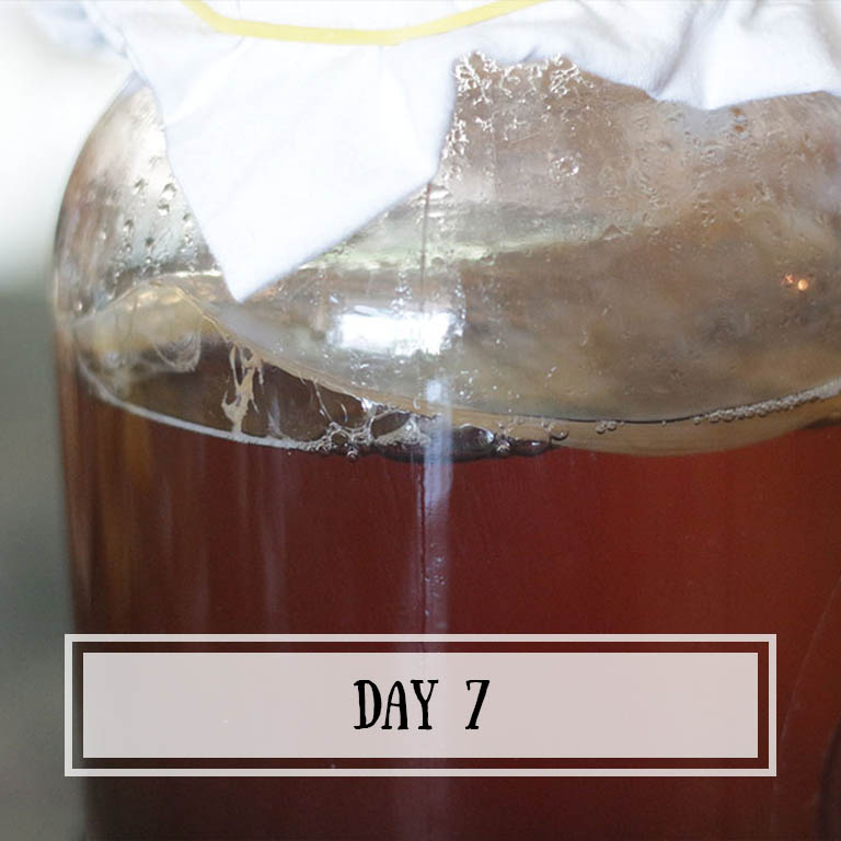 Look at that big air pocket on the left side! My scoby has done a great job at keeping all bubbles in.