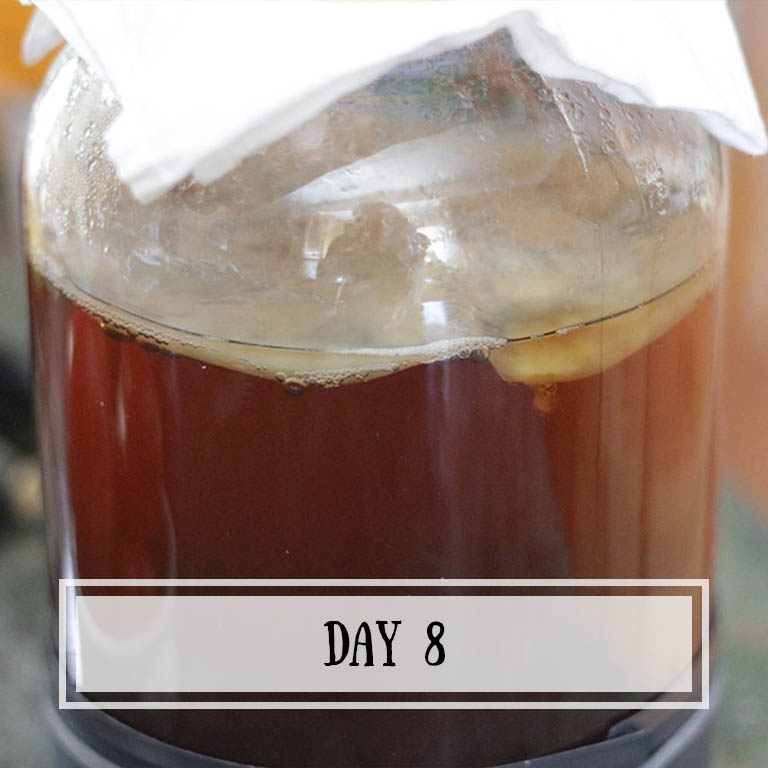 Your kombucha should be ready enough to start taste testing.