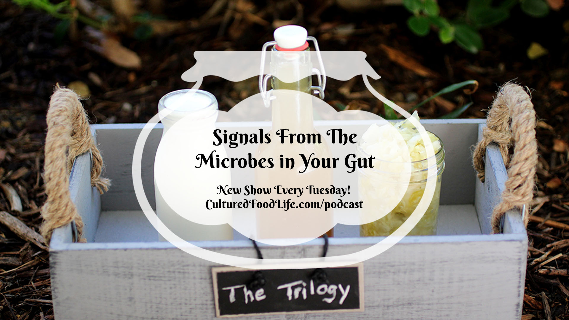 Signals From The Microbes in Your Gut Full