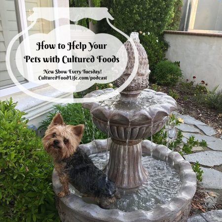 How to Help Your Pets with Cultured Foods Square