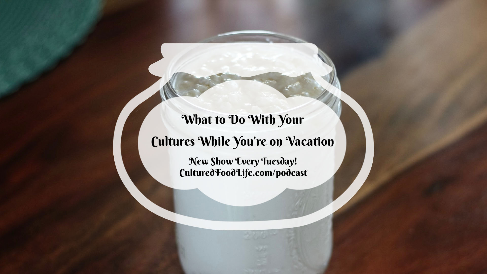 What to Do With Your Cultures While You're on Vacation Full