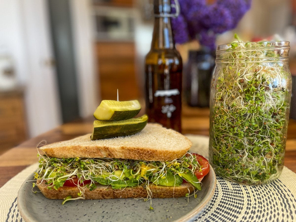 Sprouts and sandwich